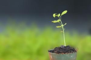 The Urgency of Cultivating Faith
